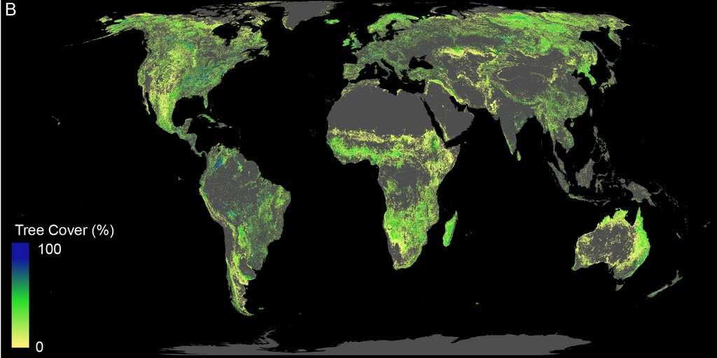 8af0cb0707_50152026_surfaces-reforestation-eth-zurich-crowther-lab.jpg